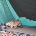 【道志の森キャンプ場】秋終わりにタープ泊でソロキャンプ!道志みちが通行止めで迂回路探し